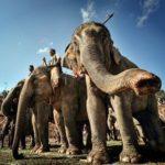 Экскурсия в Даклак