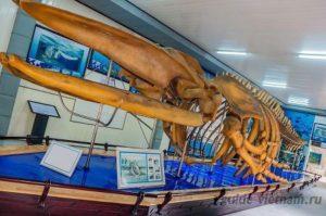 Институт и музей океанографии в Нячанге