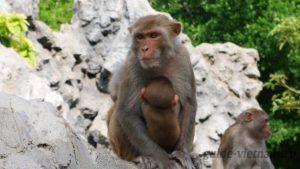 Остров обезьян (Hòn Lao, Đảo Khỉ, или Monkey Island)